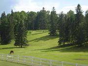 Private year round cabin retreat